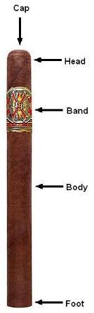 cigar anatomy1
